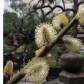 境内にはいろいろなお花が咲きます。亡くなった秀次公ご一族には若い女性もたくさんいらっしゃるので。